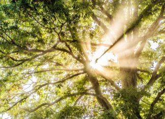 Finding Your Unique Spiritual Path