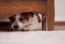 Can Pets Sense Spirits?