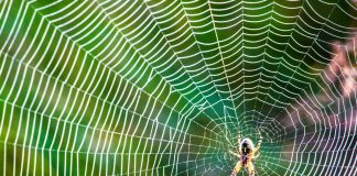 3 Reasons Why You Shouldn't Kill That Spider
