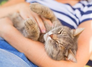 Can Pets Can Change Your Life?